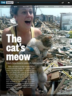 Kitteh Survives 16 Days Trapped Under Rubble after Tornado