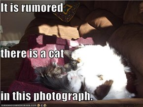 It is rumored  there is a cat in this photograph.