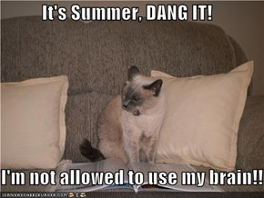 It's Summer, DANG IT!  I'm not allowed to use my brain!!