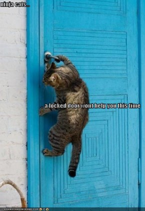 ninja cats... .. a locked door wont help you this time