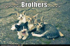 . . . . . .Brothers. . . . .