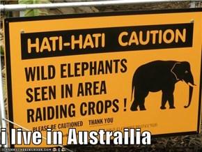 i live in Austrailia