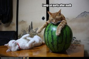 Long cat party after math