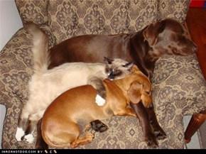 Kittehs R Owr Friends: Move Over, Bed Hog!