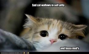 Poor poor sad cat