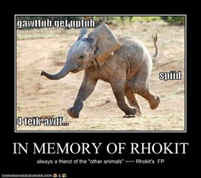 IN MEMORY OF RHOKIT