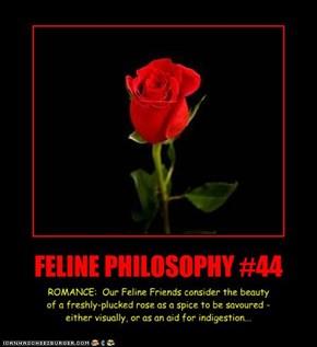 FELINE PHILOSOPHY #44