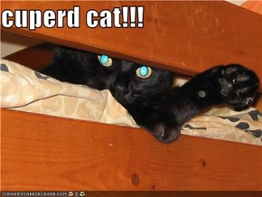 cuperd cat!!!