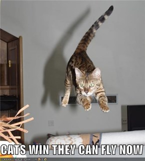 CATS WIN THEY CAN FLY NOW