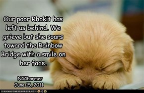 Our poor Rhokit has left us behind. We grieve but she soars toward the Rainbow Bridge with a smile on her face.