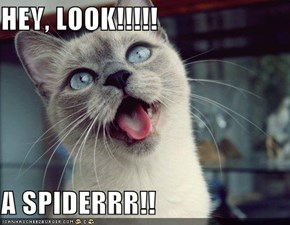 HEY, LOOK!!!!!  A SPIDERRR!!