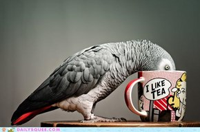 Acting Like Animals: You Heard the Mug