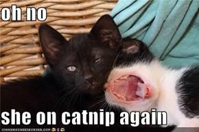 oh no  she on catnip again