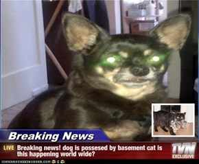Breaking News - Breaking news! dog is possesed by basement cat is this happening world wide?