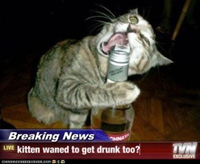 Breaking News - kitten waned to get drunk too?