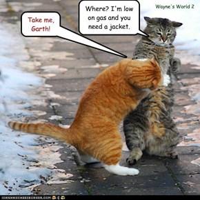 Kim Basinger kitteh!