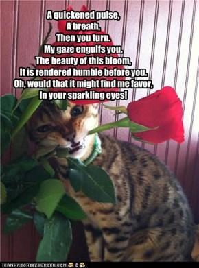 I gots u a purdy flower, behbeh!