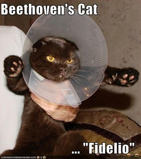 "Beethoven's Cat  ... ""Fidelio"""