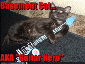 "Basement Cat...  AKA ""Guitar Hero"""