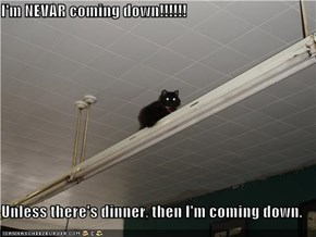 I'm NEVAR coming down!!!!!!  Unless there's dinner, then I'm coming down.
