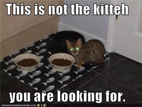 This is not the kitteh  you are looking for.