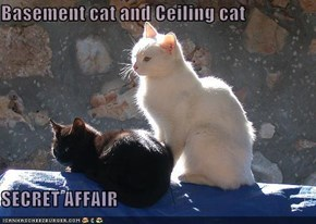 Basement cat and Ceiling cat  SECRET AFFAIR