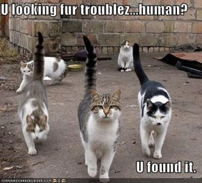 U looking fur troublez...human?  U found it.