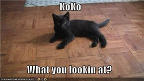 KoKo  What you lookin at?