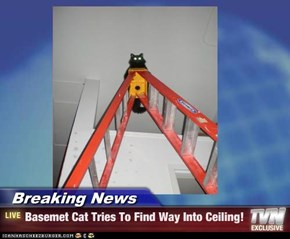 Breaking News - Basemet Cat Tries To Find Way Into Ceiling!