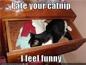 I ate your catnip  I feel funny