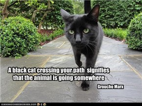 A black cat crossing your path  signifies that the animal is going somewhere