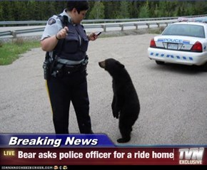 Breaking News - Bear asks police officer for a ride home