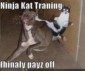 Ninja Kat Traning  fhinaly payz off