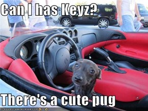 Can I has Keyz?  There's a cute pug