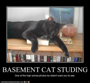BASEMENT CAT STUDING