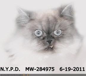 N.Y.P.D.   MW-284975   6-19-2011