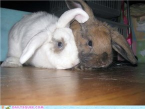 CuddleBunnies!