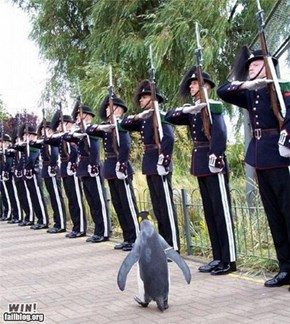 Penguin WIN