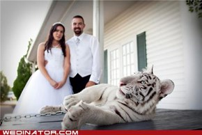 The Traditional Bride + Groom + Tiger shot