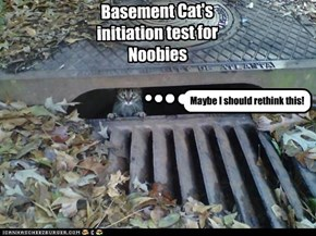 Basement Cat's initiation test for Noobies