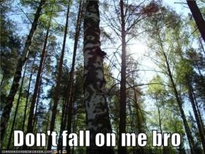 Don't fall on me bro