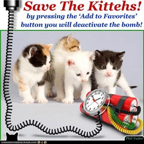 Save The Kittehs! . . . . . . . . . . . . . . . . . . . . . . . . . . . . . . . . . . . . . . . . . . . . . . . . .
