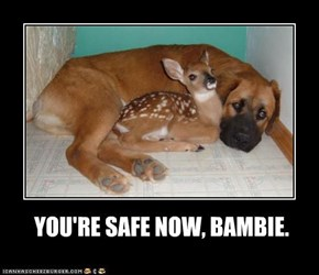 YOU'RE SAFE NOW, BAMBIE.