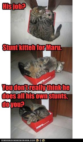 Stunt kitteh for Maru.