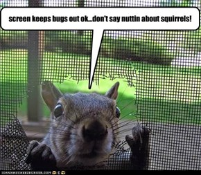 screen keeps bugs out ok...don't say nuttin about squirrels!