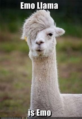 Emo Llama  is Emo