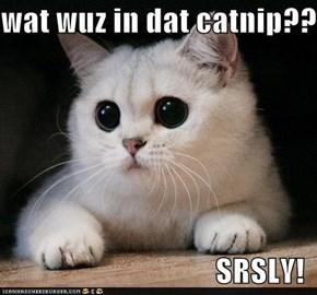 wat wuz in dat catnip???  SRSLY!