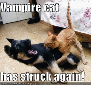 Vampire cat  has struck again!
