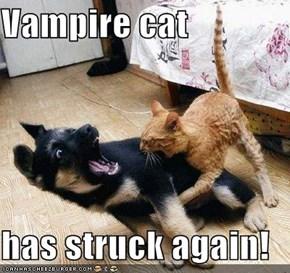 Vampire cat  has struck again!