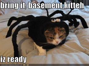 bring it, basement kitteh  iz ready